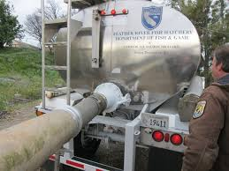 Tanker Trucks Used To Transport Salmon